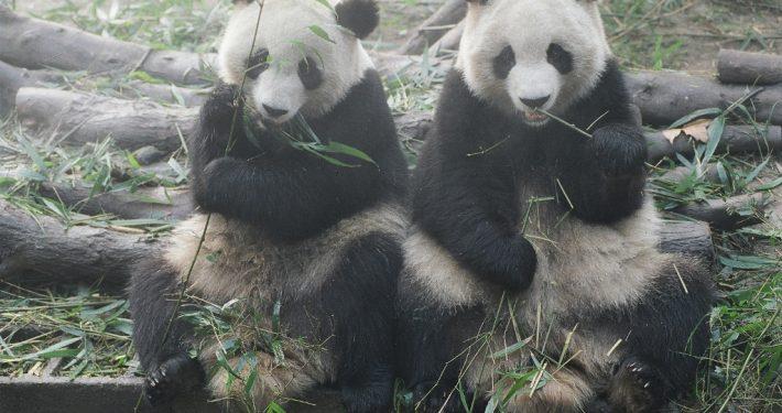 Xian Chengdu 57990015